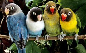 Peluang usaha ternak burung
