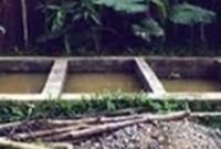 cara ternak lele menggunakan kolam permanen